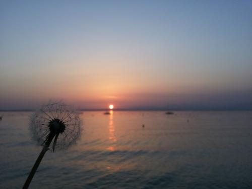 Venedig - Sonnenuntergang mit Pusteblume