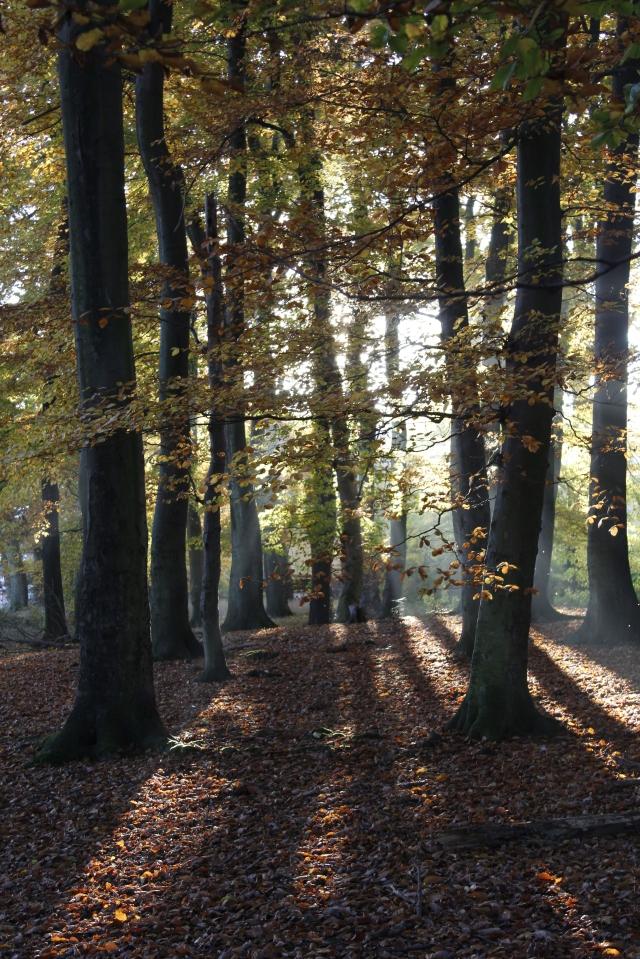 Wald mit Schatten und Sonne