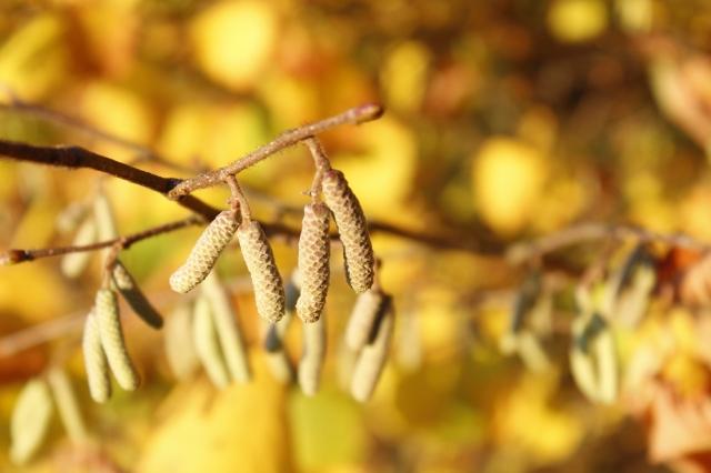 Zweig vor Herbstblättern