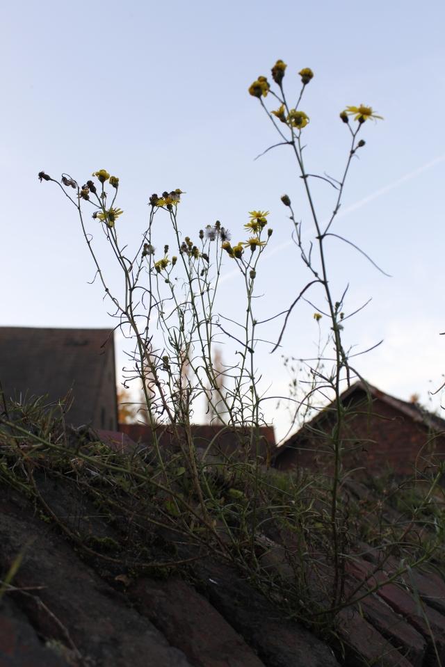 Herbstblumen auf einer Mauer